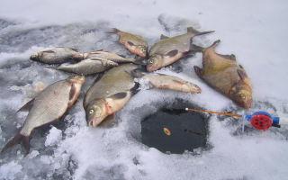 Как ловить леща зимой со льда?