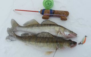 Как и на что ловить судака зимой — снасти для ловли