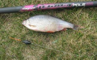Ловля рыбы маховой удочкой и ее оснастка