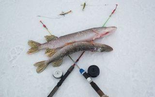 Какие снасти нужны на судака для ловли зимой?