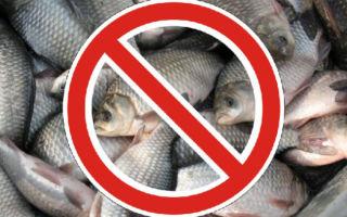 Все о весеннем запрете на рыбалку — до какого срока длится и какие есть ограничения?