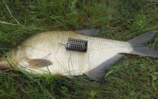Тайны профессионала рыбалки леща на фидер