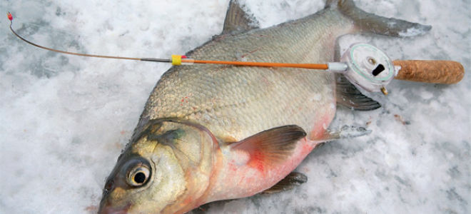 ТОП 7 снастей для ловли леща зимой на течении