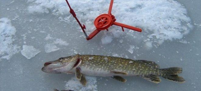 Рыбалка зимой на щуку — где искать и как правильно ловить на жерлицы?