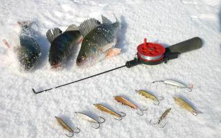 Прикормка и снасти для зимней ловли окуня