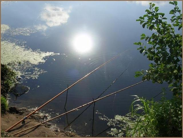 Платная рыбалка в Минской области
