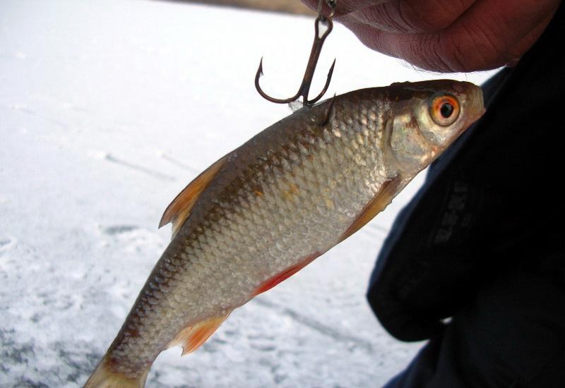 Рыбалка ловля щуки на живца