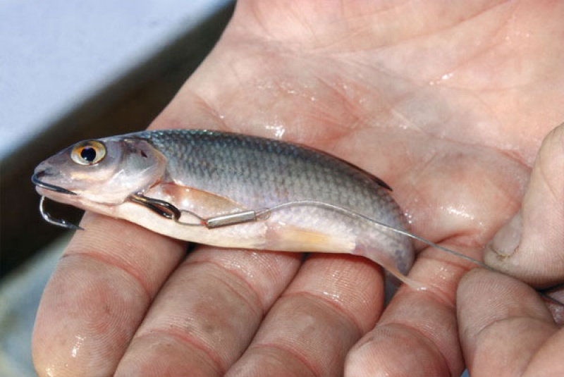 Рыбалка в нахлыст