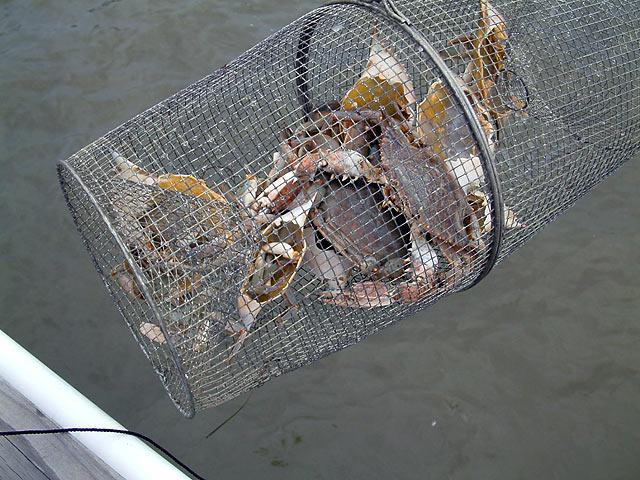 Ловушки для рыбы своими руками