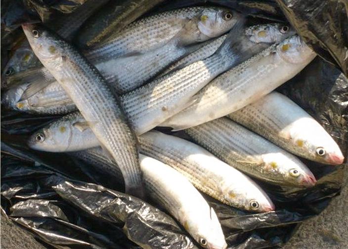 рыбалка на черном море как ловить какая рыба водится