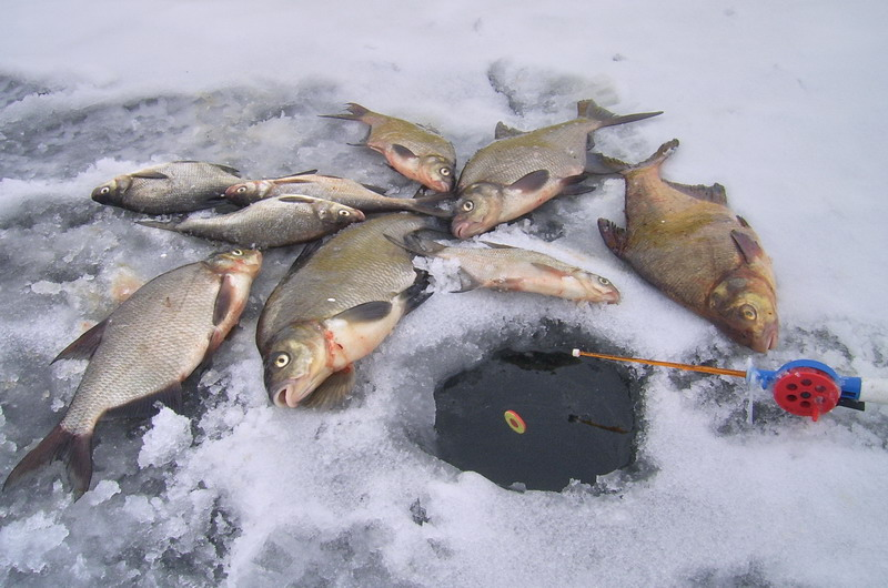 ловля леща со льда зимой на течении, ночью оснастка зимней снасти удочки как ловить