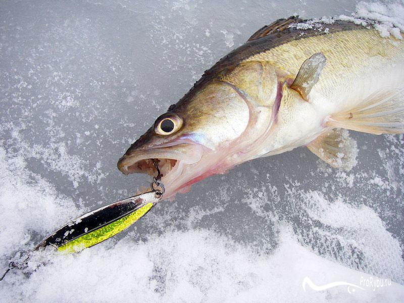 Удочка для зимней рыбалки как выбрать