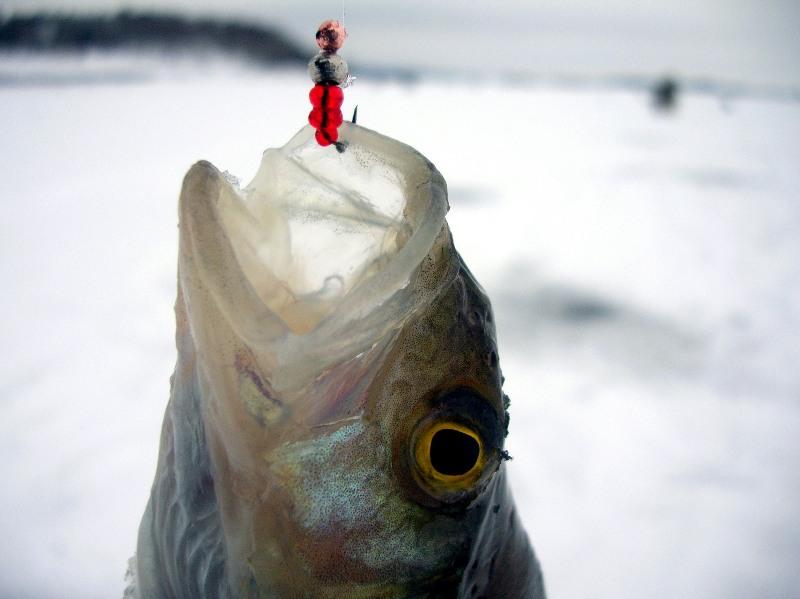 лучшие уловистые мормышки на плотву, мормышки для зимней рыбалки как ловить зимой