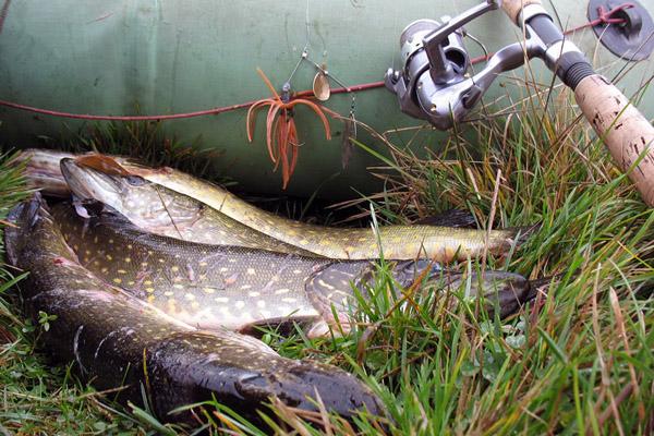 клев рыбы в пермском крае