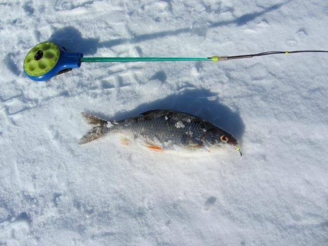 отчеты с рыбинки
