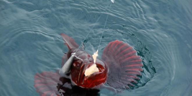 Рыбалка На Черном Море С Берега Снасти