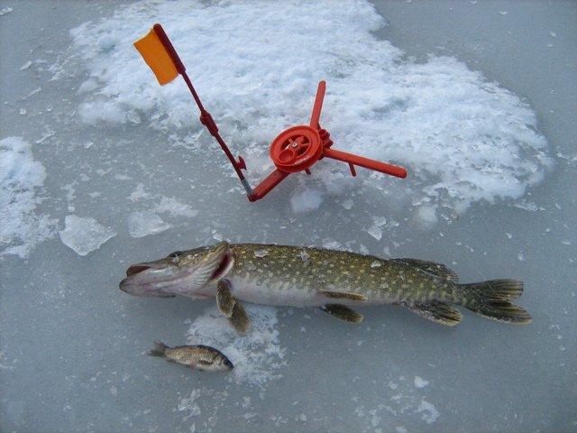 рыбалка зимой на щуку где искать как ловить на жерлицы, как правильно ставить жерлицы, зимняя удочка