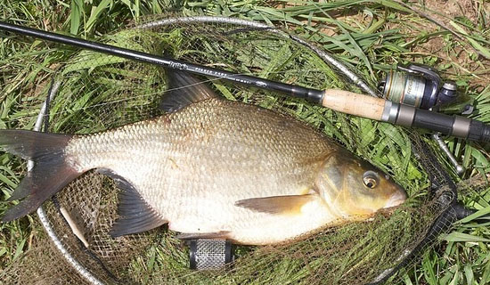 Особенности рыбалки на Старом Осколе