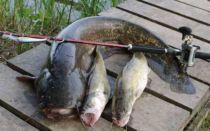Рыбалка в Волгоградской области