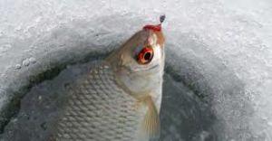 Рыбалка на плотву зимой на мормышку