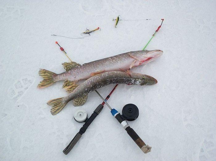 Cнасти на судака для ловли зимой