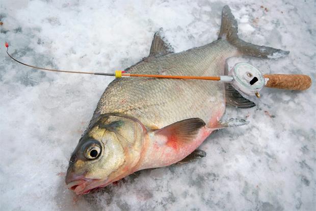 Зимняя снасть для ловли леща на течении